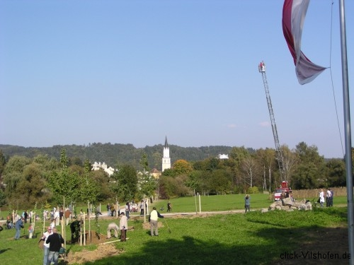 Buergerpark-Ginkgo Vilshofen