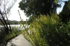 Donauradweg Vilshofen-Hofkirchen, Blumen