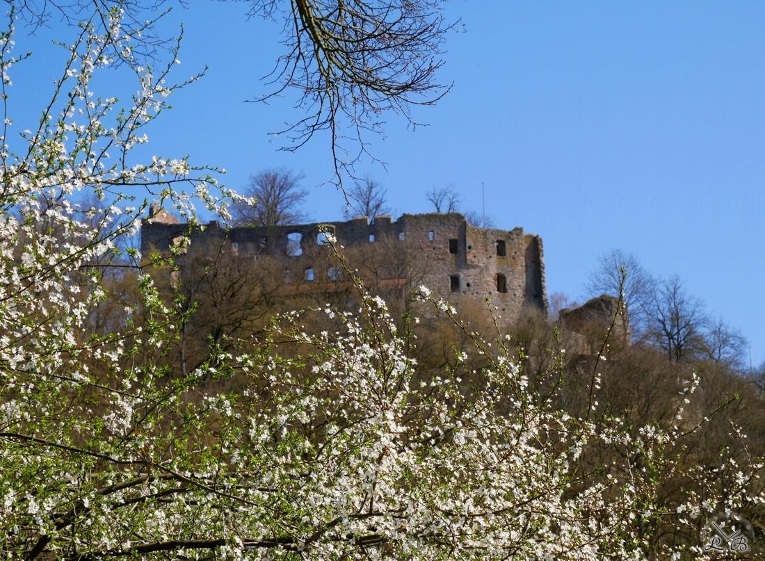 Hilgartsberg-Blüten-2020-03-3