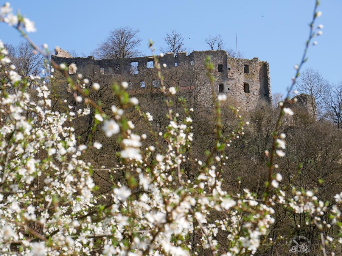 Hilgartsberg-Blüten-2020-03-4