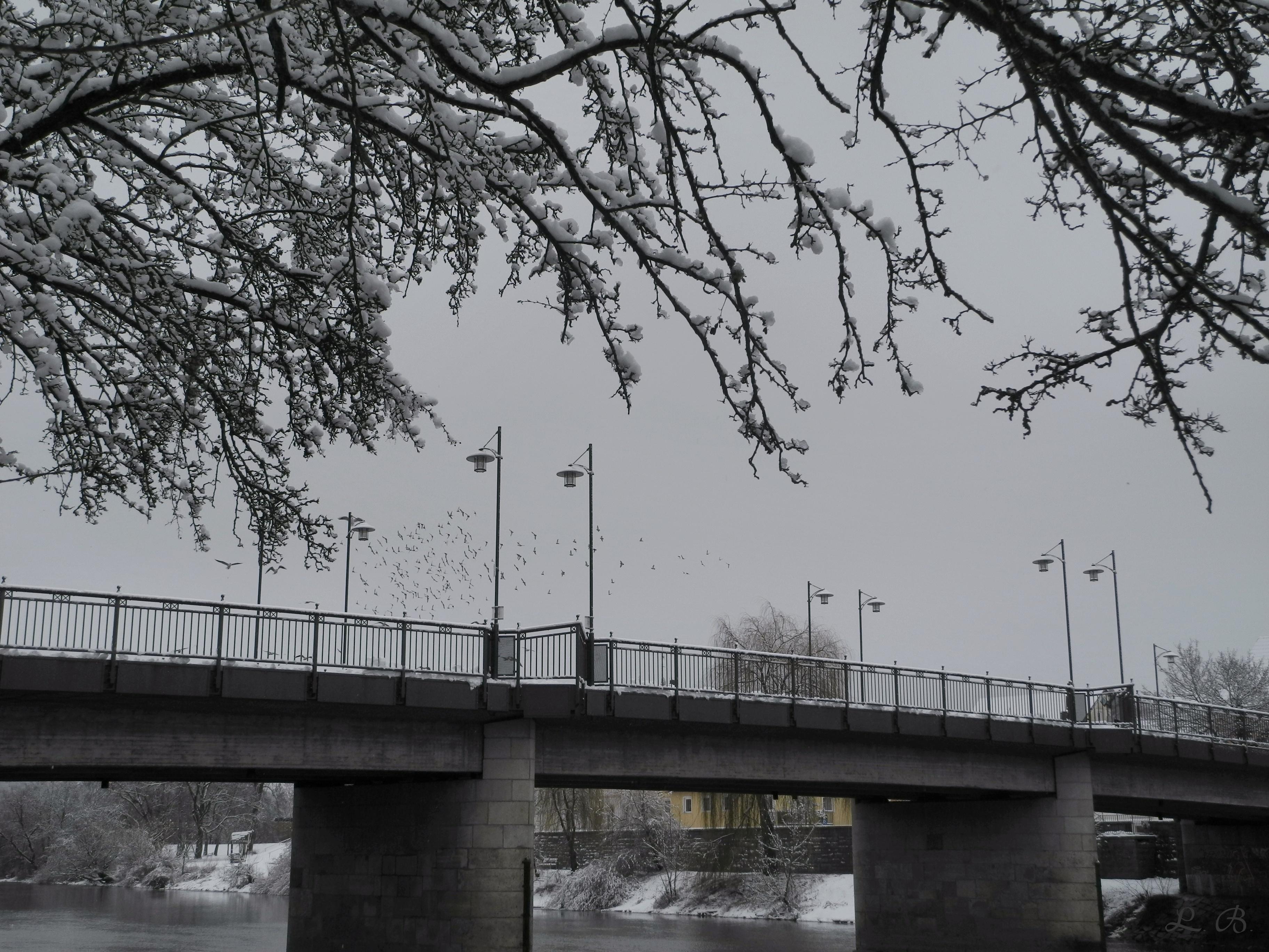 Vilsbrücke mit Möven