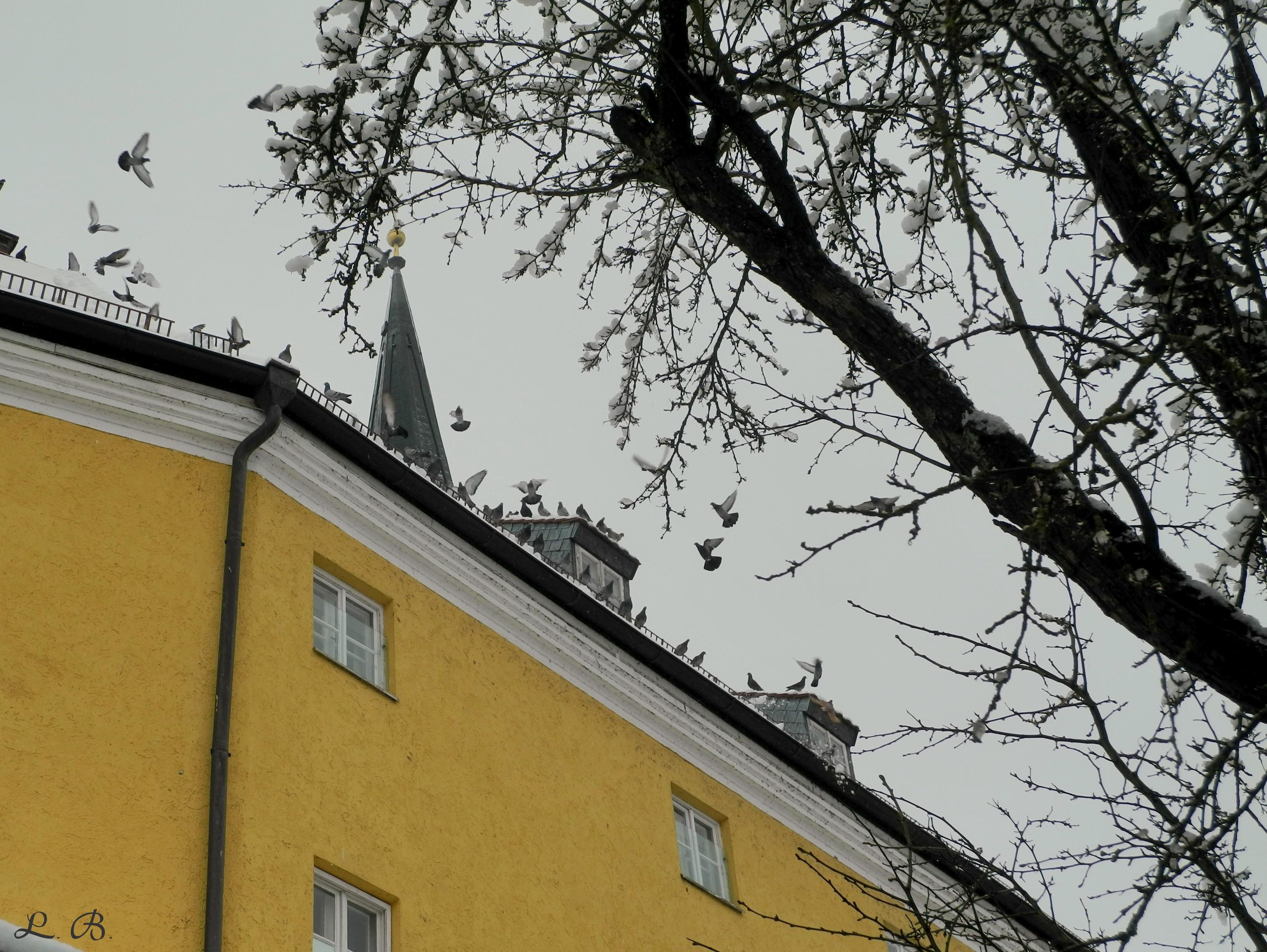 Tauben auf dem ehemaligen Bruderhaus
