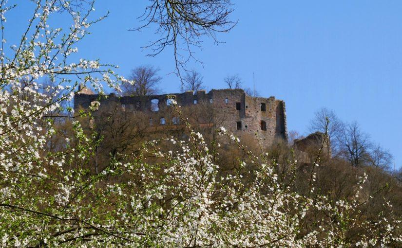 Burgruine im Frühling