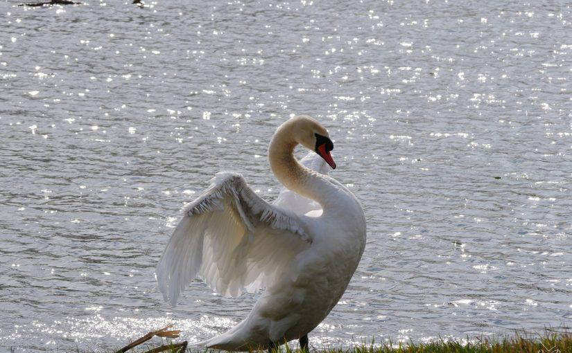 Der weiße Riesenvogel